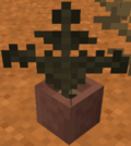 Badlands Potted Fern.png