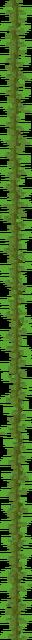 Kelp Plant (texture) JE3.png