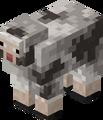 Rocky Sheep