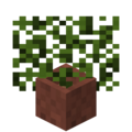 Potted Spruce Leaves.png
