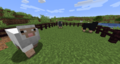 Four different colors of naturally spawning sheep: light gray, gray, brown, and black.