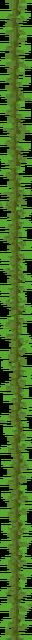 Kelp Plant (texture) JE1.png