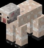 Sheared Rocky Sheep.png