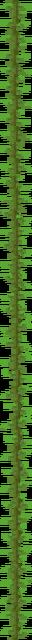 Kelp Plant (texture) JE2.png