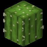 Kaktusz.png