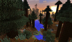 Vörösfenyő erdő.jpg