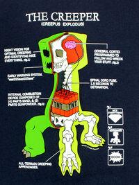 CreeperAnatomy.jpg