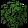 Dark Oak Leaves (Fast).png