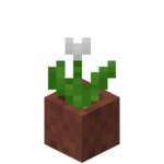 Potted White Tulip.png