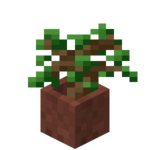 Potted Oak Sapling.png