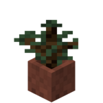 Potted Spruce Sapling.png
