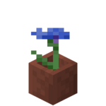 Potted Cornflower.png