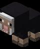 Baby Black Sheep.png