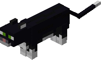 Czarny kot.png
