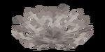 Martwy wachlarz koralowca rogatego.png