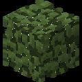 Brzozowe liście przed TextureUpdate.png