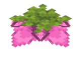 Pylikwiat.png