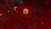 Światłogrzyb w szkarłatnym lesie