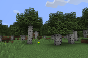 Birch forest.png
