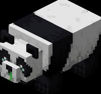 Słaba panda.png