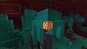 Światłogrzyb w Spaczonym lesie.