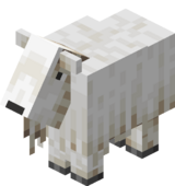 Koza bez rogów.png
