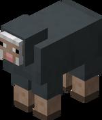 Owca szara.png