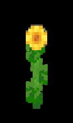 Słonecznik.png