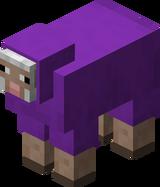 Owca fioletowa.png
