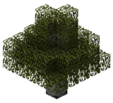 Береза (TerraFirmaCraft).png