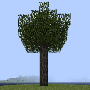 Дерево клена.png