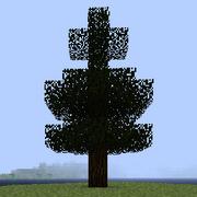 Дерево сосны.png