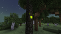 Forest firefly.png