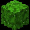Акациевая листва.png