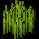 Стадия роста хмеля 7 (IndustrialCraft 2).png