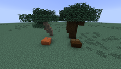 Dar oak4 & acacia.png