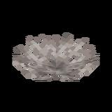 Мёртвый роговый веерный коралл.png