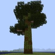 Хлопковое дерево.png