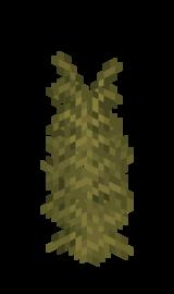 Пустынный раскидистый папоротник.png
