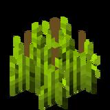 Стадия роста хмеля 5 (IndustrialCraft 2).png