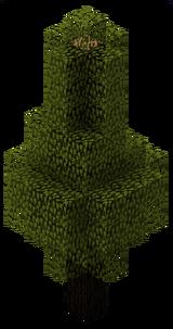 Дугласовая пихта (TerraFirmaCraft).png