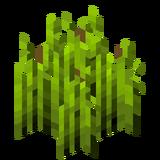 Стадия роста хмеля 6 (IndustrialCraft 2).png