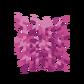Мозговой коралл.png