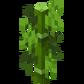 Бамбук.png
