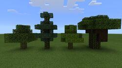 Умирающие деревья.jpg