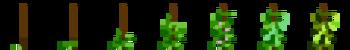 Фасоль (фазы роста) (TerraFirmaCraft).png