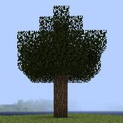 Дерево белого вяза.png