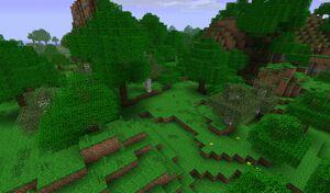 Дождевой лес.jpg