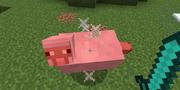 Критический удар выполненный на свинье.
