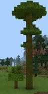 Дерево гігант значно більше за звичайне тропічне дерево.